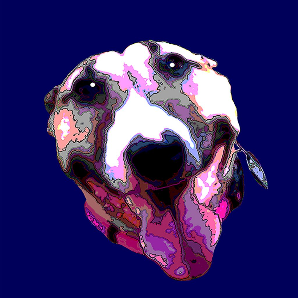 Fawn and white bull terrier head only cookie cutter style on blue background smiling