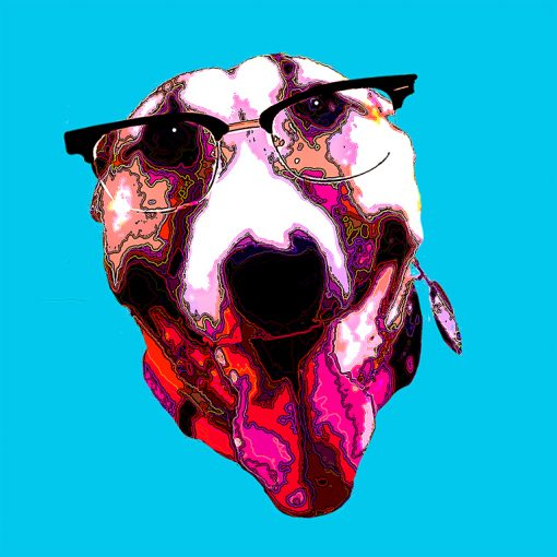Fawn and white bull terrier face with scientific glasses on light blue background