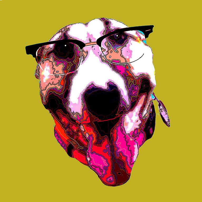 Fawn and white bull terrier face wearing scientific glasses on gold yellow background